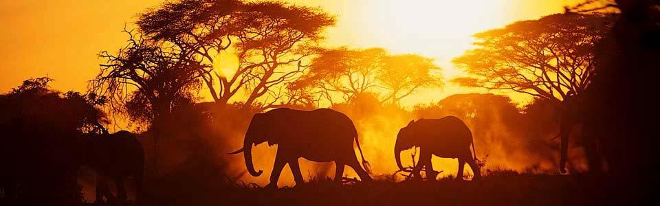 Vinn resa till Afrika hos Casino.com